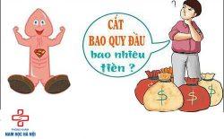 cat-bao-quy-dau-het-bao-nhieu-tien